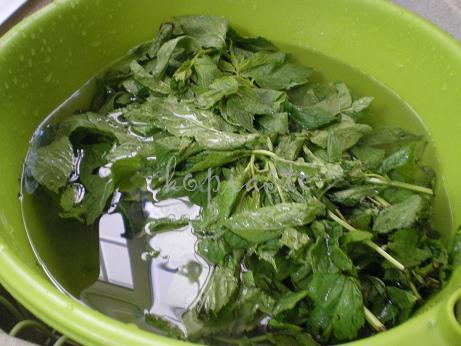 how to grow mint from store bought mint