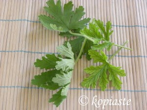 Fragrant geranium leaves